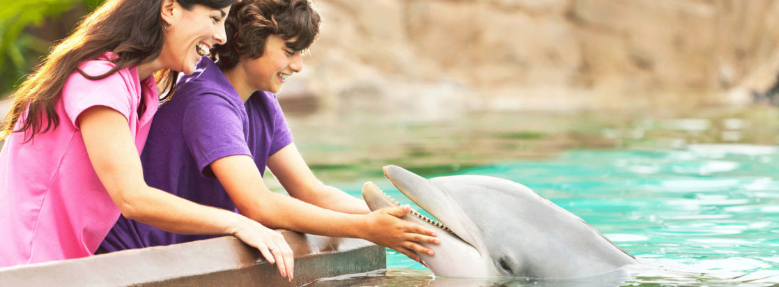 Two people holding a dolphin's face at SeaWorld