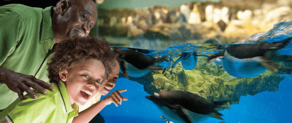 Family smiling at penguins in exhibit at SeaWorld