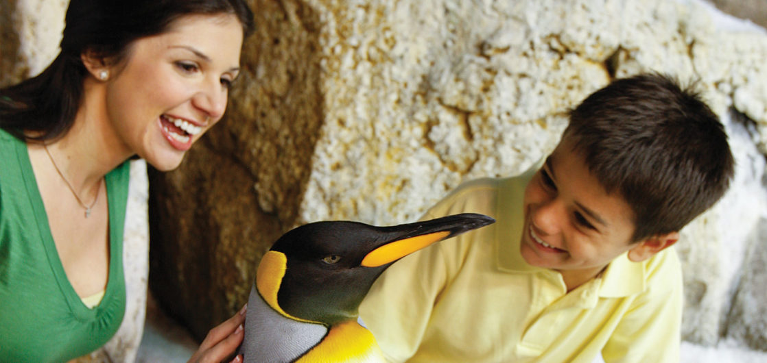 Family staring at penguin and smiling