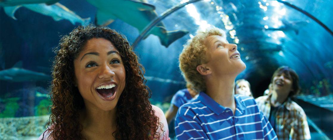 People smiling under shark encounter