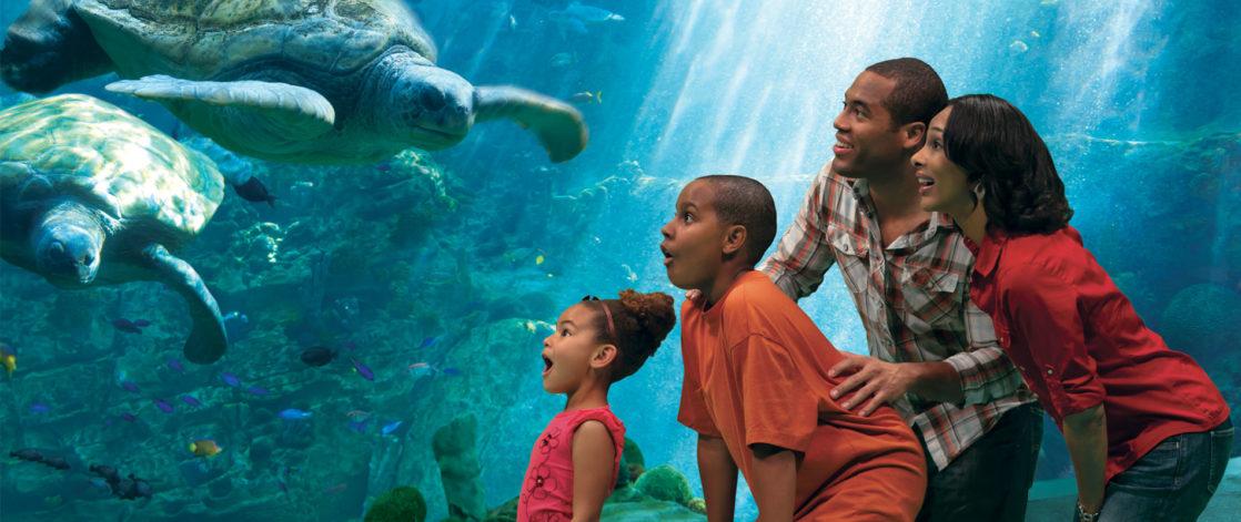 Family smiling at sea turtles