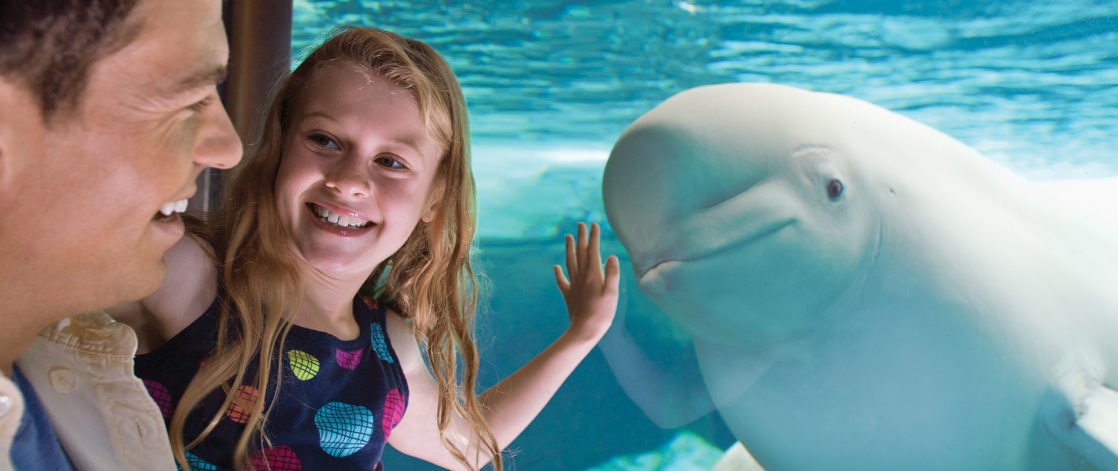 Girl smiling at whale in a cage