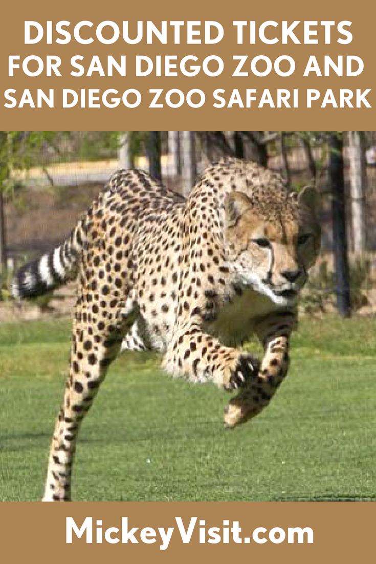 Discounted Tickets For San Diego Zoo And San Diego Zoo Safari Park