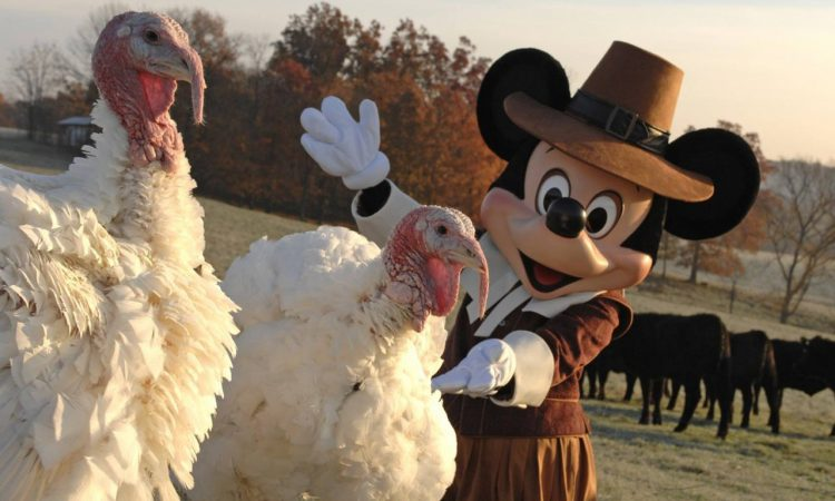Mickey in a pilgrim outfit posing next to turkeys