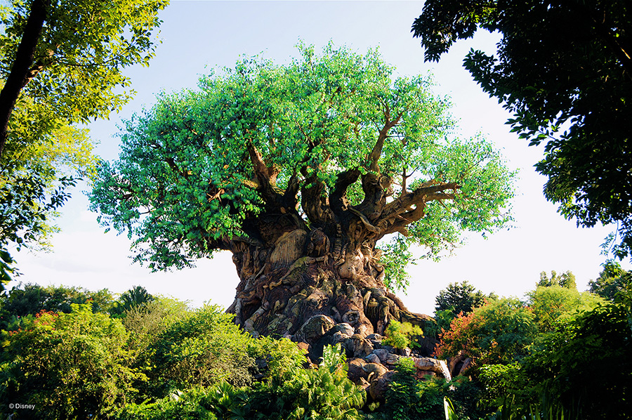 Tree of Life in the Animal Kingdom
