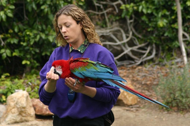 San Diego animal trainer holding a bird