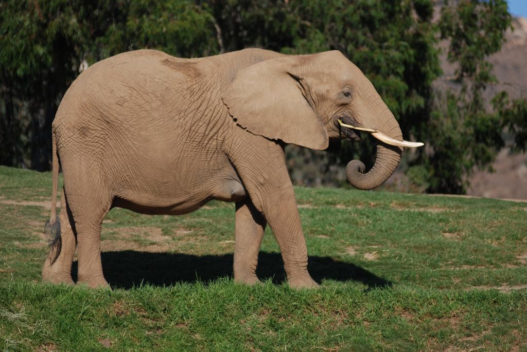 Elephant at the Safari Park