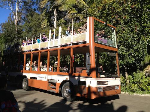 Bus Tour at the San Diego Zoo
