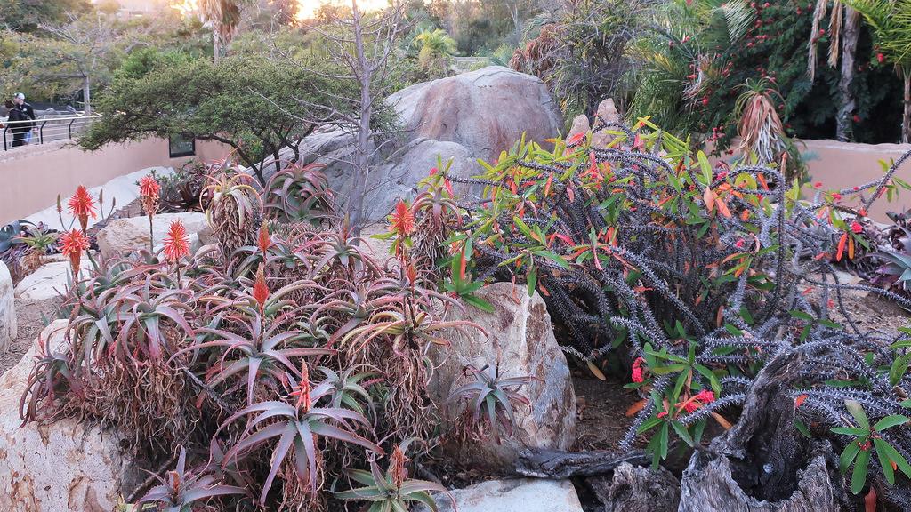 Botanical areas of the san diego zoo